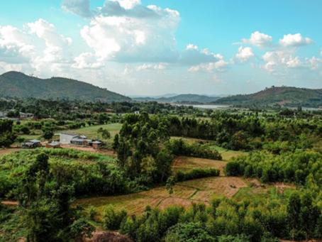Industrial Vegetation Management Market for Pesticides