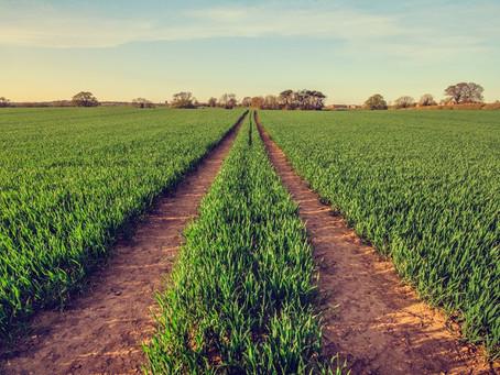 Novos tratamentos biológicos estão ganhando participação no mercado de nematicidas