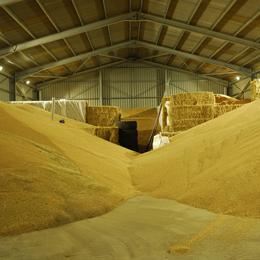 Maior número de instalações de armazenamento de grãos leva a um crescimento no mercado de inseticida