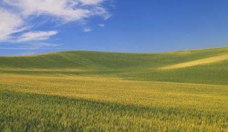 Principais tendências de distribuição e varejo no mercado de proteção de cultivo dos EUA