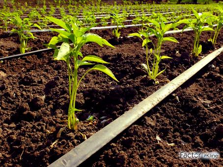 As Estratégias e Novidades do Mercado de Produtos Biológicos No Agronegócio