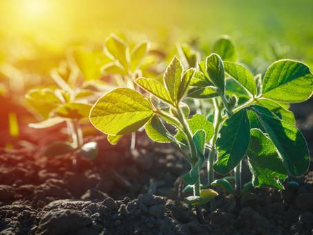 O Mercado Global de Biopesticidas