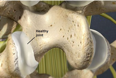 healthy joint