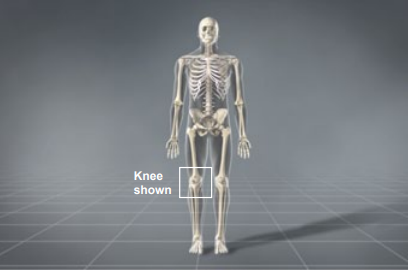 knee shown