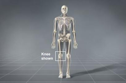 knee shown