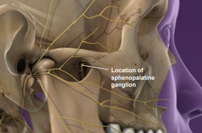 location of sphenopalatine hanglion