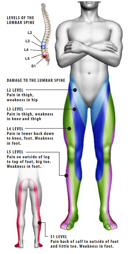 level of the lumbar spine