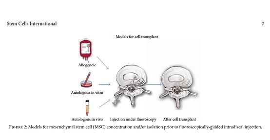 stem cell internation