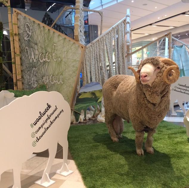 AWI Wool Week