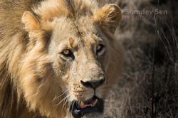 The King of Nairobi