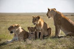 Signature African Safari