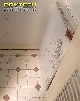 Mold Remediation Birmingham Alabama