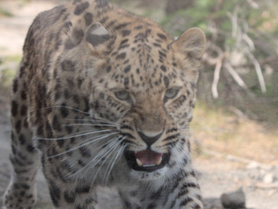 Ecozonia, Terres de prédateurs... Premières images