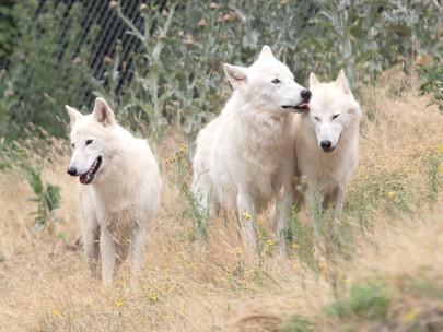 5 raisons de visiter le Parc Animalier de Casteil