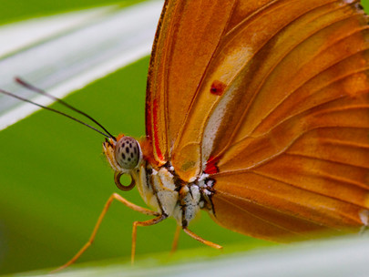 5 infos sur... Le Tropique du Papillon