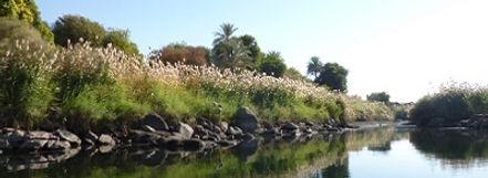 De Nijl in Egypte - Saffraan Reizen