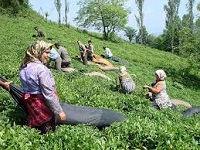Rondreis Iran noord enzuid - Saffraan Reizen