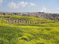 Jerash - Saffraan Reizen