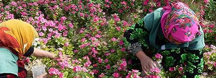 Saffaan Reizen Nurata Oezbekistan