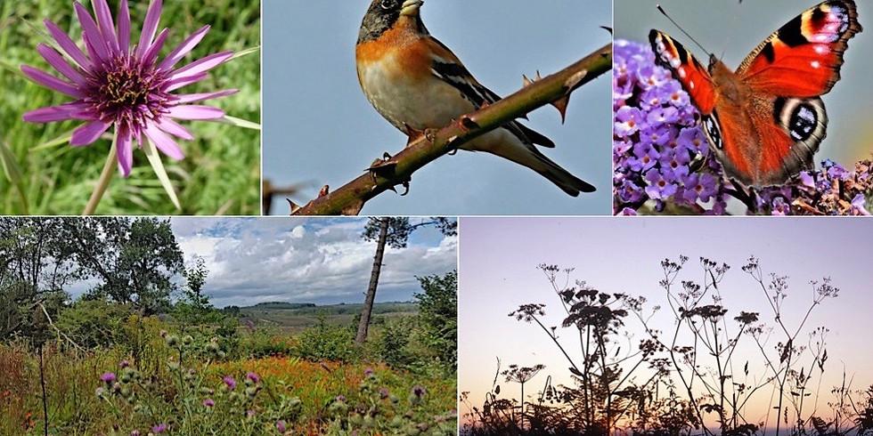 Wildlfowers - Weeds or Wonders?  Exhibition celebrating all things wild in Woodbury