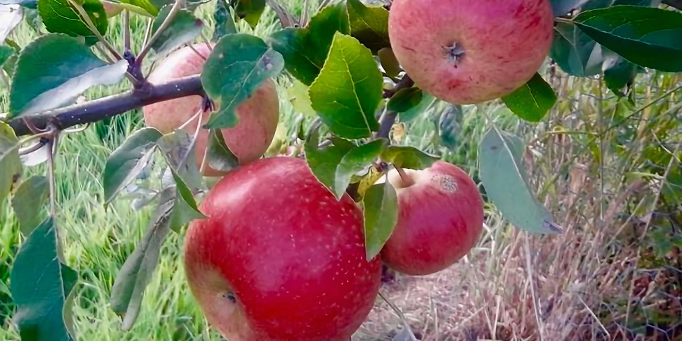 'Weeds and wonders' - Apple Day (1)