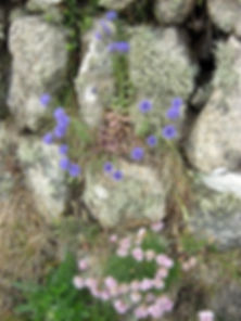 best-scabious-thrift-lichen-blog_edited.