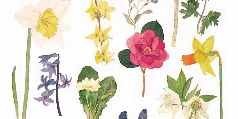Wildflower watercolour painting