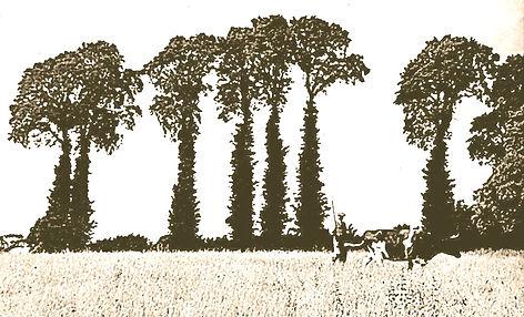 Edgar Ware & elm trees ETh_edited.jpg