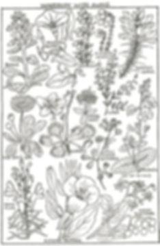 WKM WN cover (1).jpg