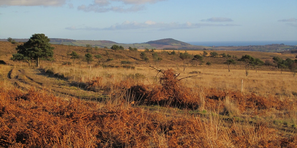 Talk on the Pebblebed Heaths - their ecological and cultural history