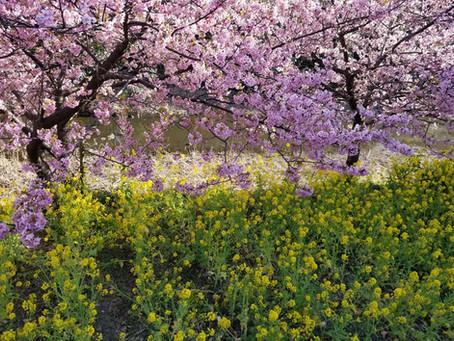 春は間近(^^)