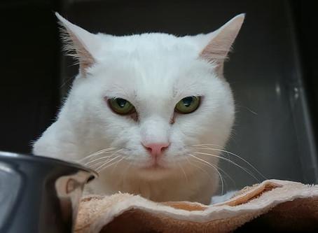 病院の猫スタッフ紹介①