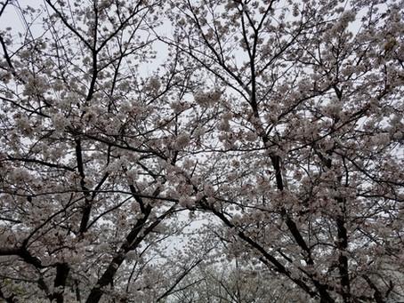 春とフィラリア症