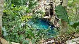 Eine halboffene Cenote