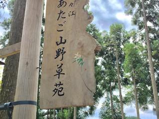 笹百合のささやき(佐々江あたご山野草苑さん)
