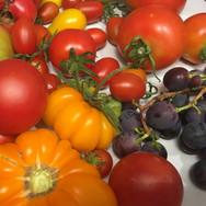 SW-Biohof-Tomatenfarben_bearbeitet.jpg