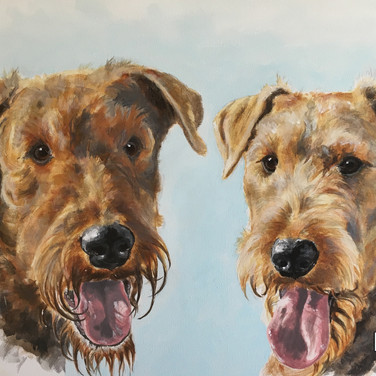 2 Airedale Terrier