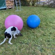 Aufbau Treibball
