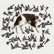 """el perro de Pavlov"""