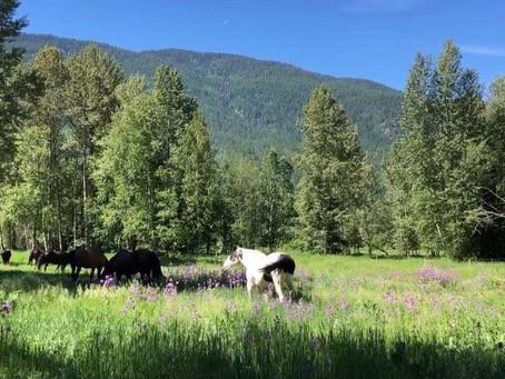Arion Farm June Newsletter