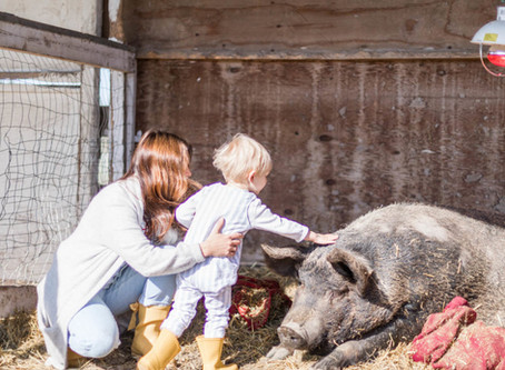 5 Ways to Support Your Local Sanctuary or Businesses During COVID-19