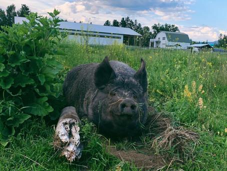 Arion Farm Updates