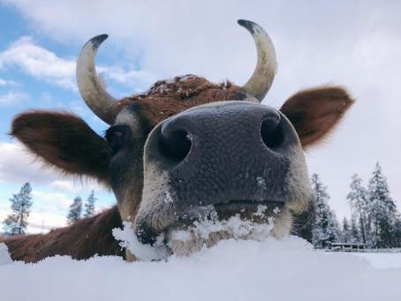 Arion Winter Newsletter: Big News!