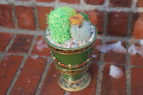 Cactus- Kings Cup