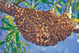 Advanced Beekeeping Date TBA