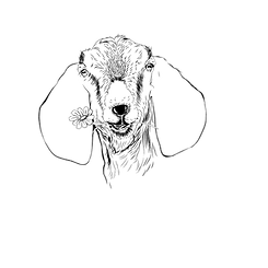 nubian-goat-drawing-test.png