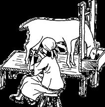 milking-goat_illustration.png