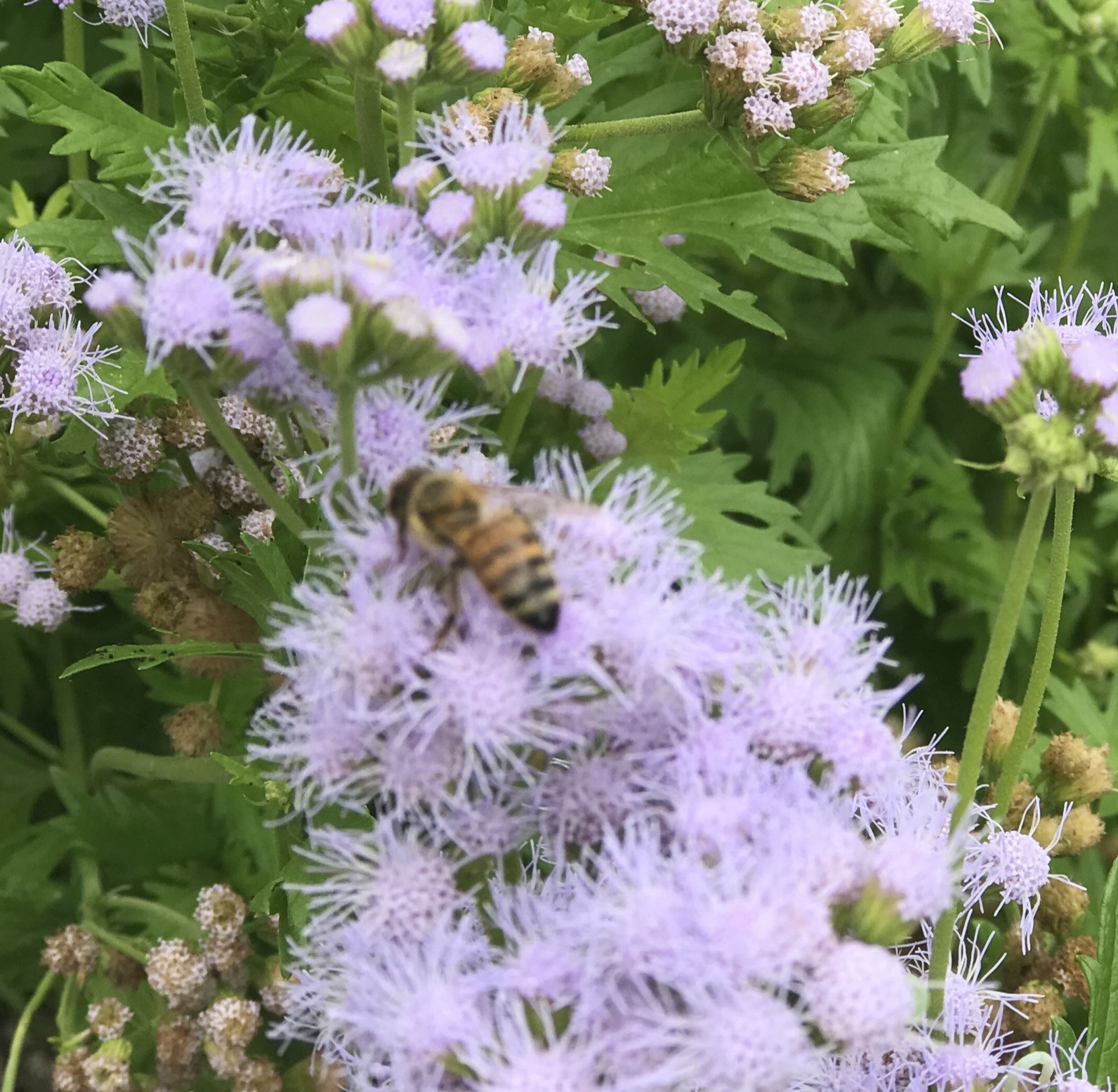 Keep Our Bee's Buzzing! FREE Class