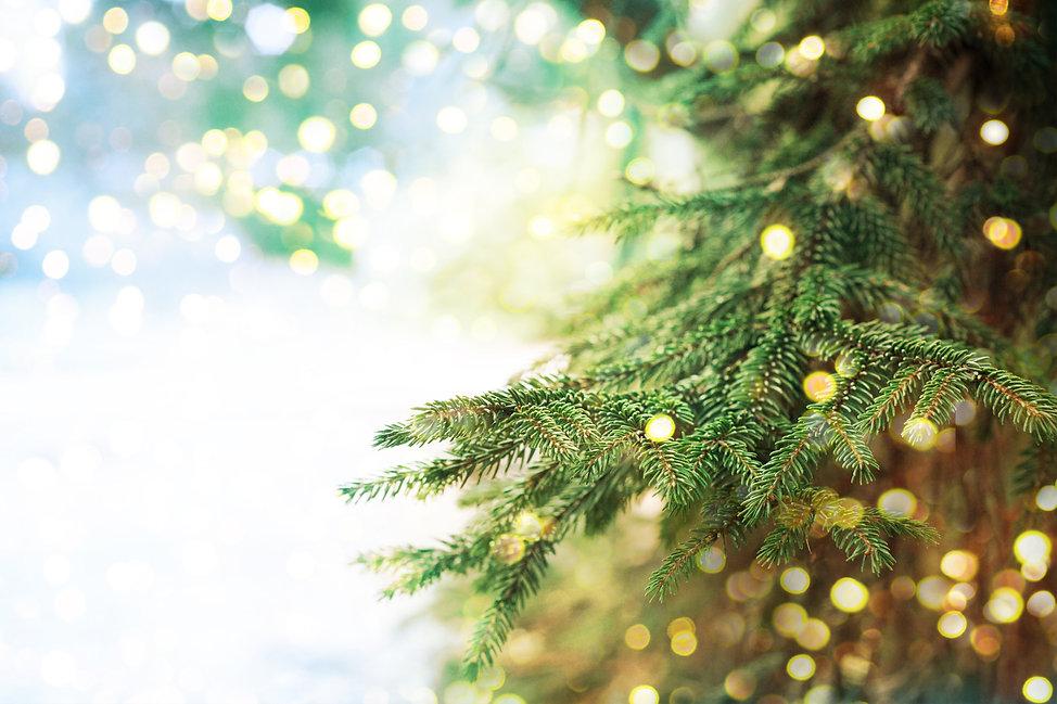 Closeup of Christmas Tree Background | Home Decor | Kringles