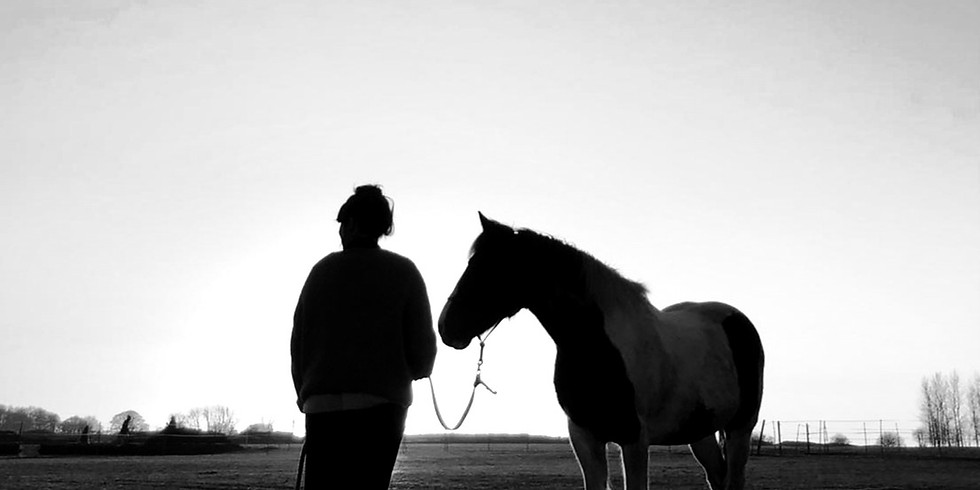 Horse Dance: The Alchemy of Grief